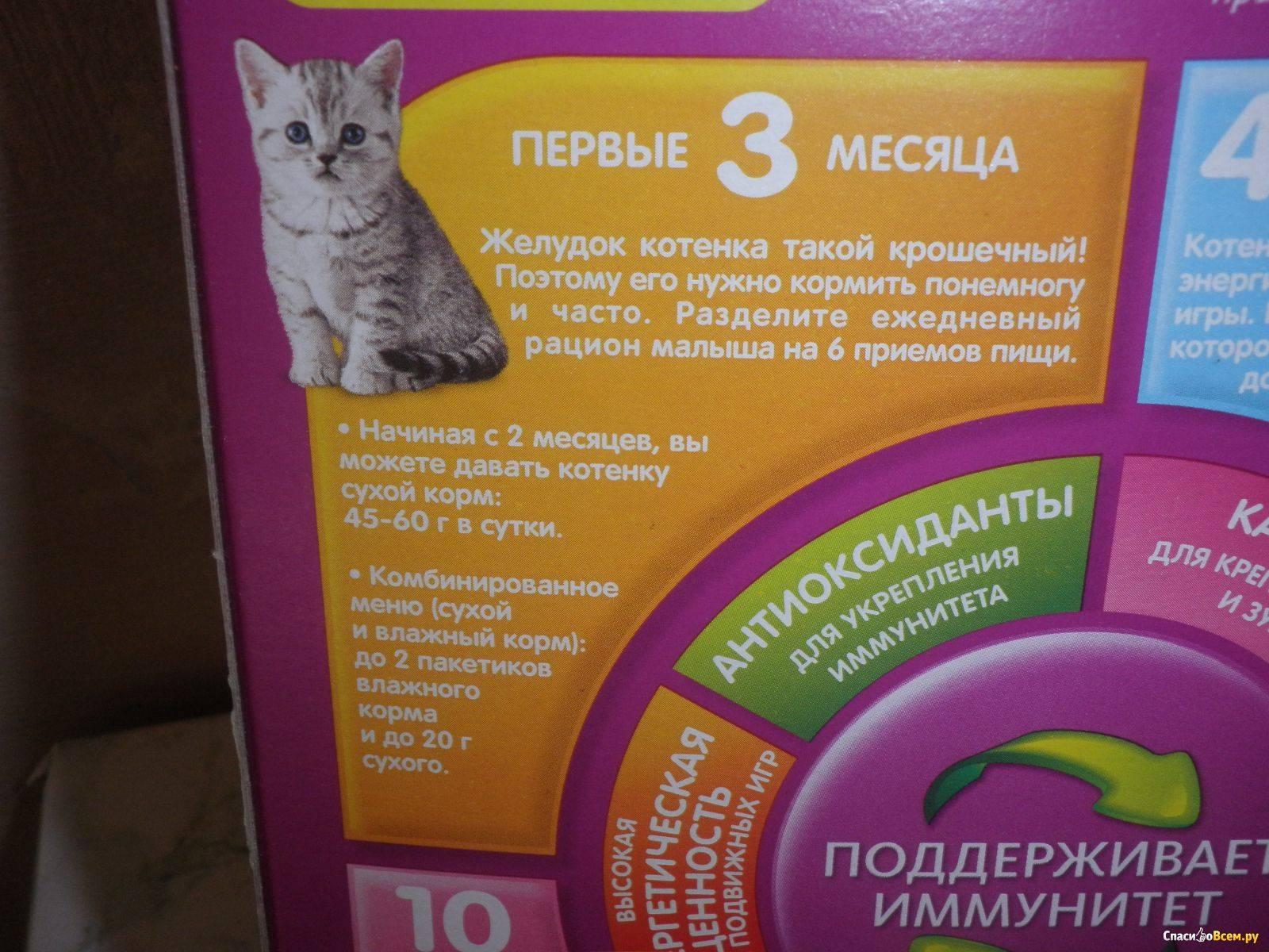 Как кормить новорожденного котенка без кошки