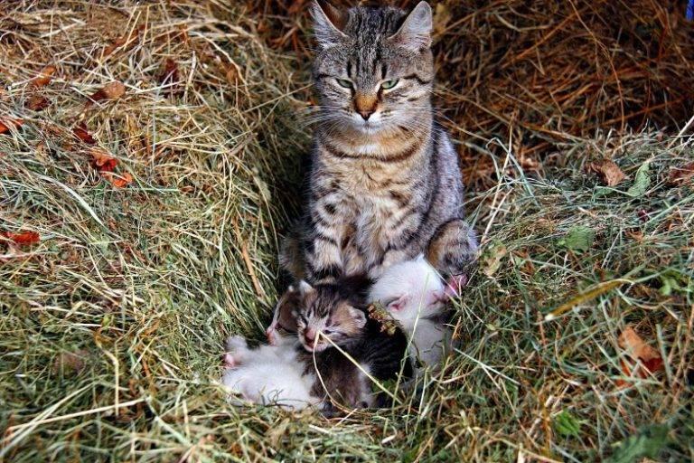 Почему коты мурчат: основные причины того, зачем животные это делают, что означает мурчание кошки
