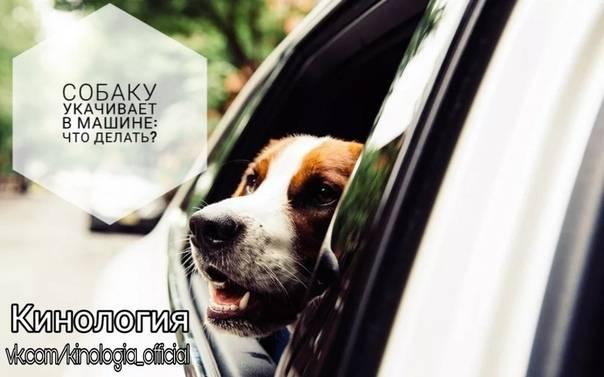 Почему собаку укачивает в машине