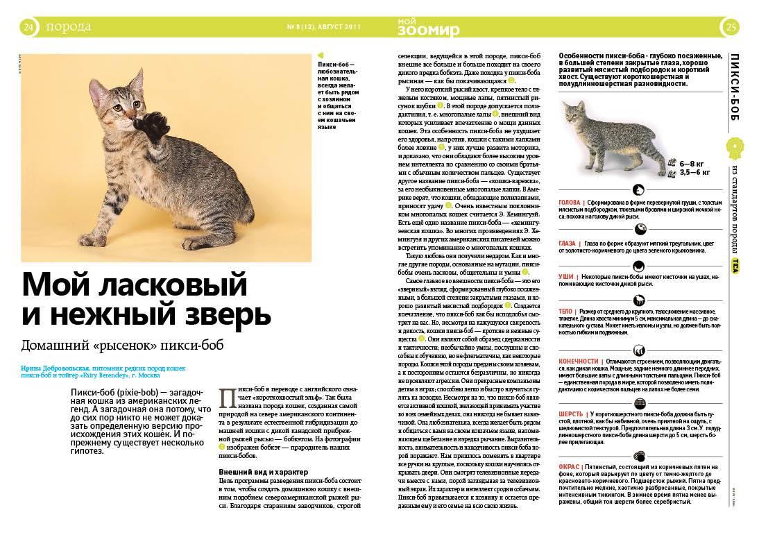 Пиксибоб: описание породы с фото — pet-mir.ru