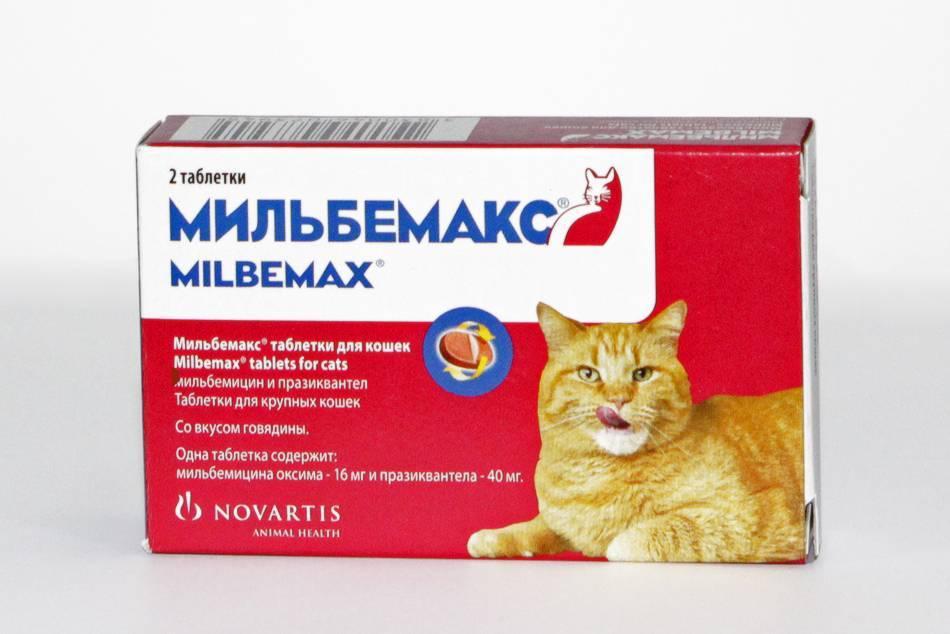 Какие обезболивающие препараты разработаны для кошек, что можно дать коту в домашних условиях?