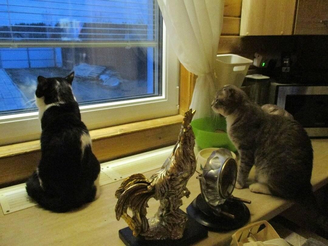 Уход за кошкой или котом после стерилизации и кастрации: поведение животного, сколько отходит от наркоза, как кормить, обрабатывать шов