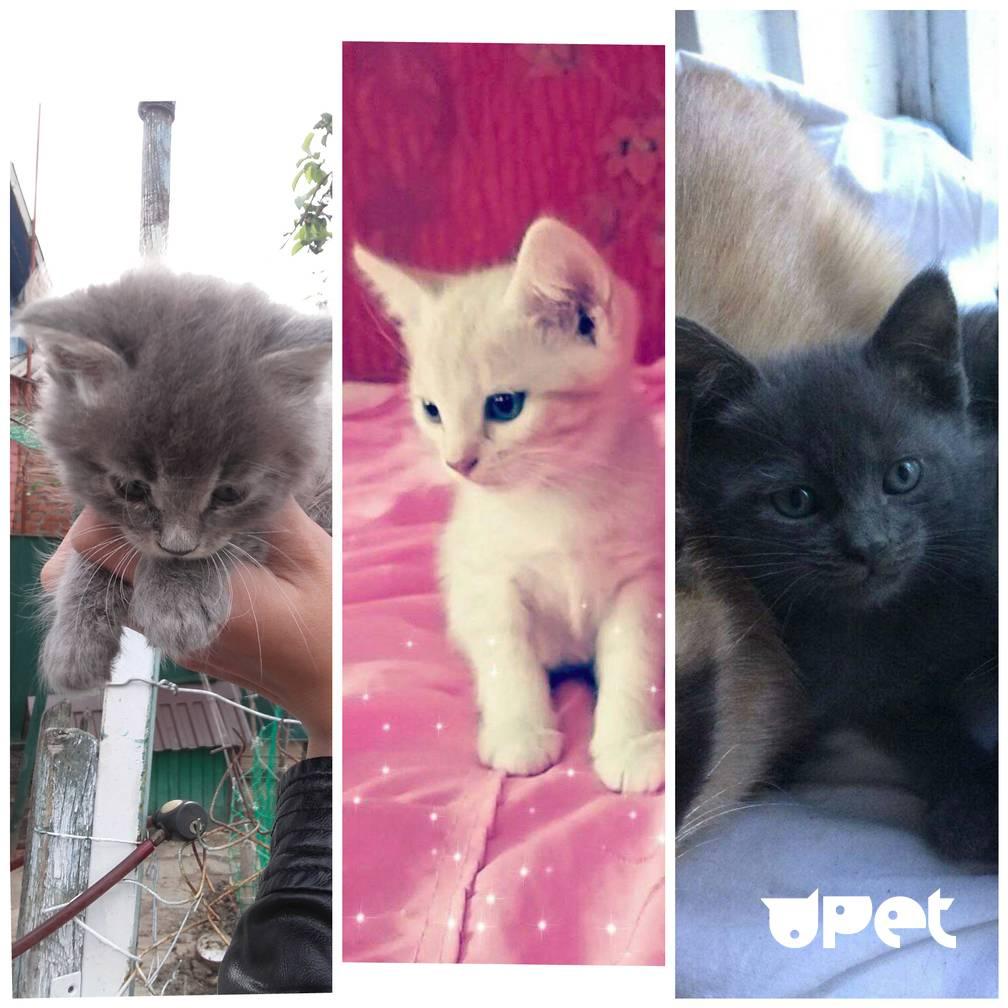 Как выбрать котенка: критерии выбора, окрас, внешние данные, советы, фото