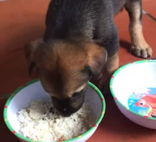 Почему щенок икает: причины икоты у собак и ее устранение