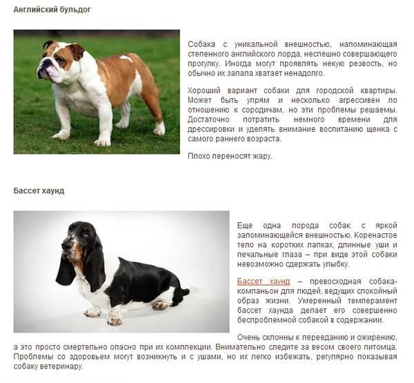 Такса: описание собаки, характер, фото, содержание и уход