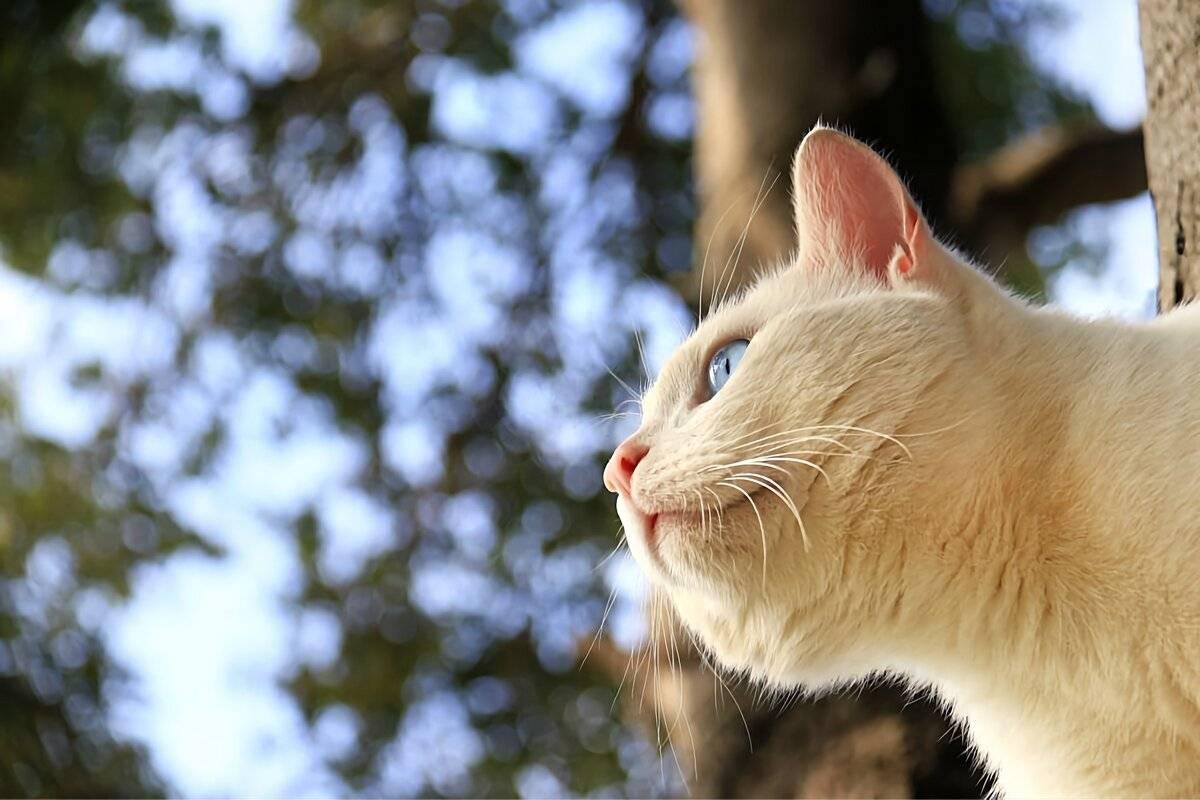 Как отучить котенка кусаться и царапаться: воспитываем, играем, отвлекаем