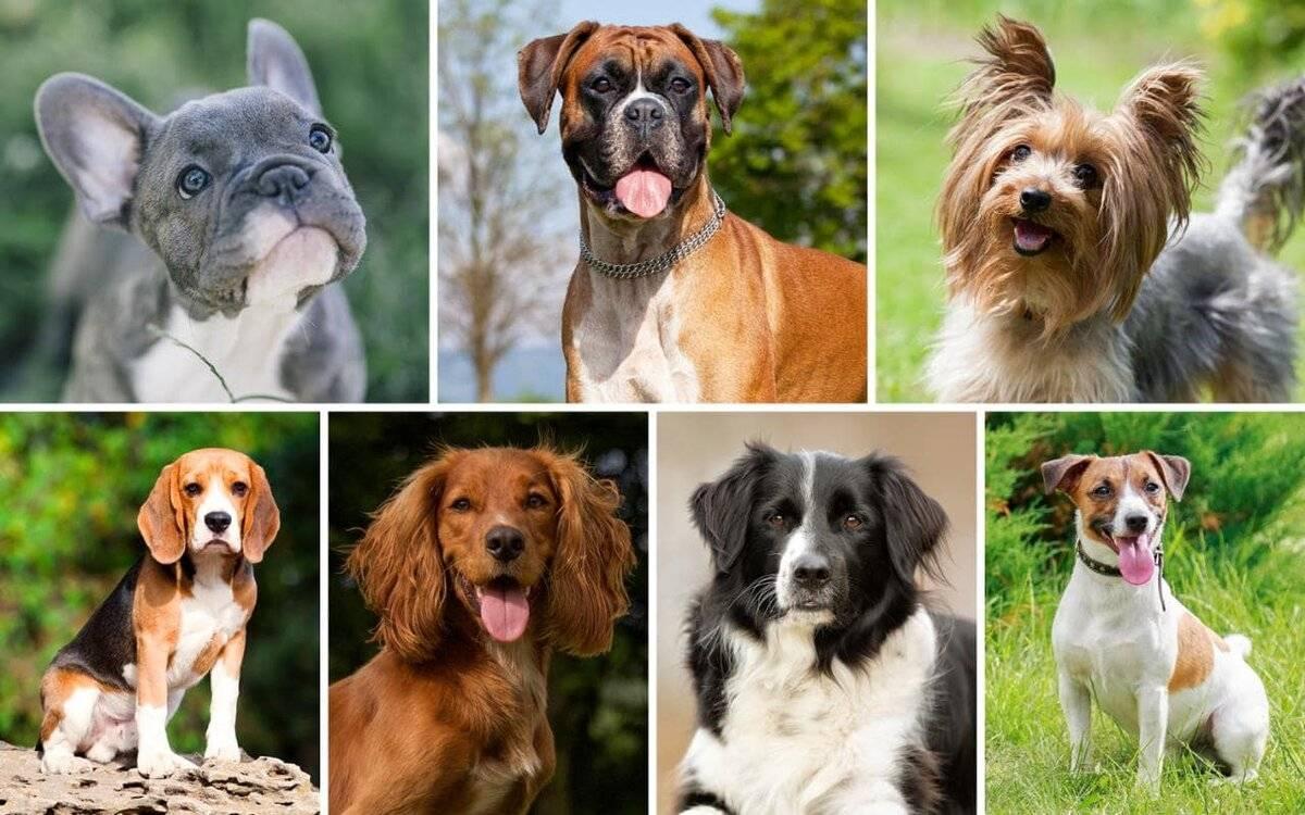 Какую породу собаки выбрать: идеальный пес для всей семьи