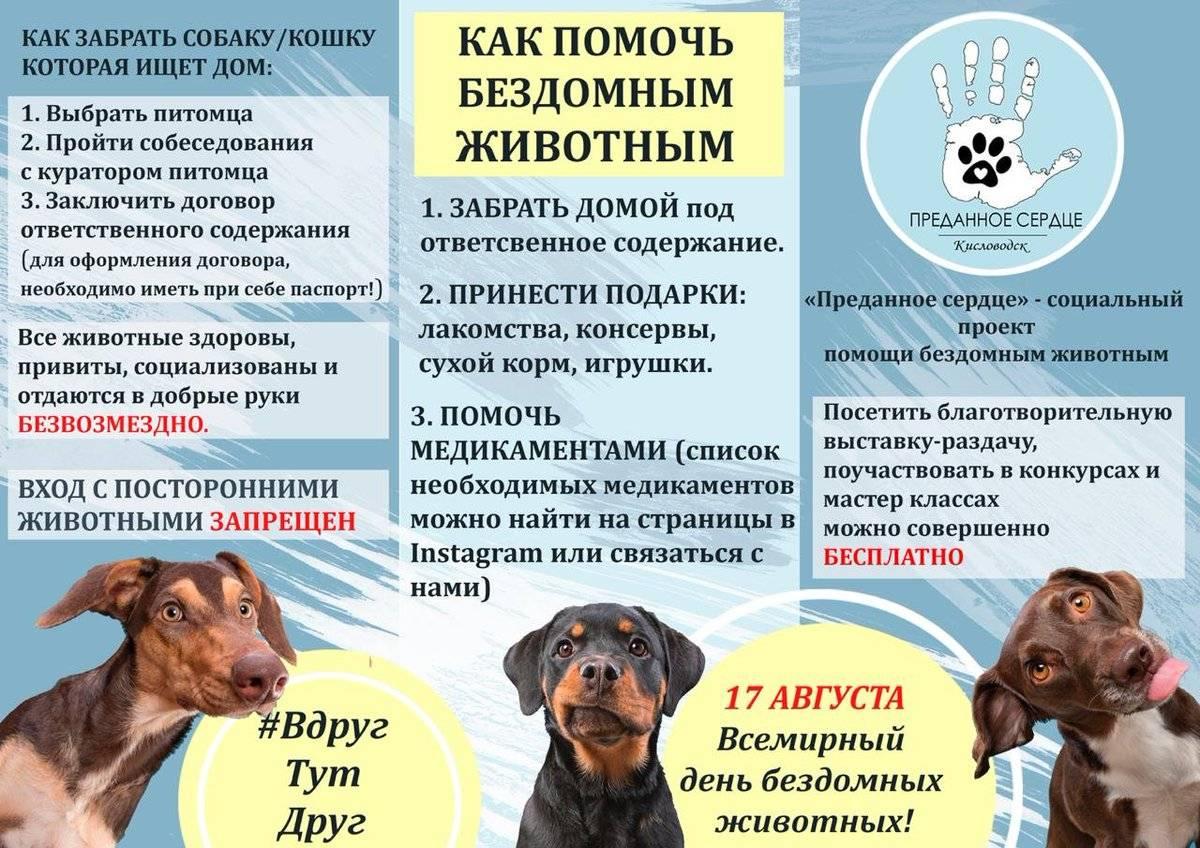 6 способов как помочь бездомным собакам, не подбирая всех домой | gafki.ru | яндекс дзен