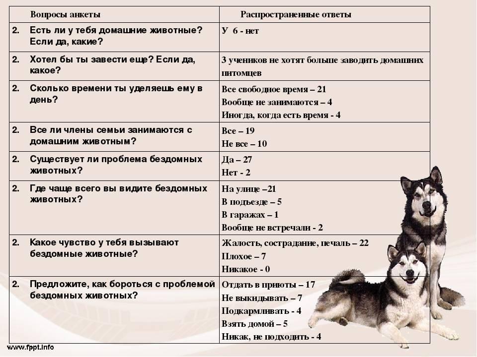 Как дрессировать собаку хаски в домашних условиях | дрессировка