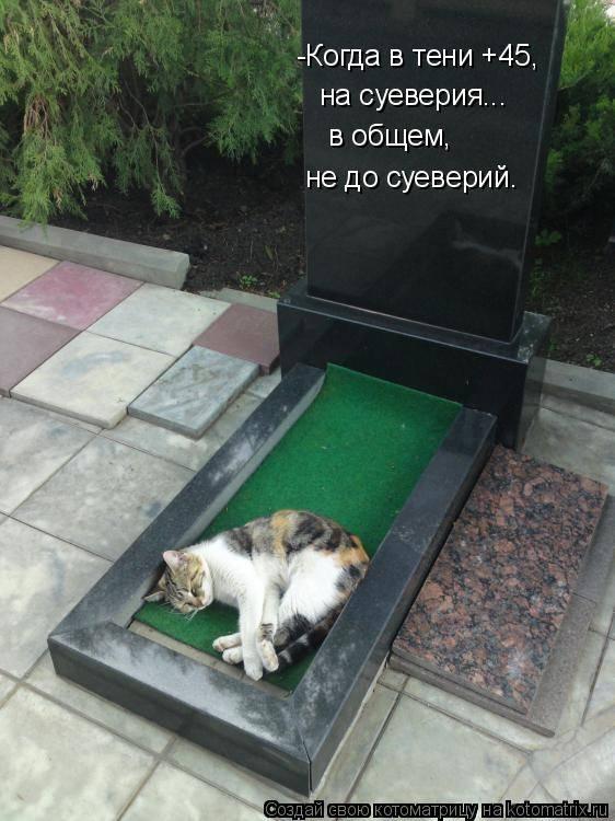 Где и как правильно похоронить кошку | кот и кошка