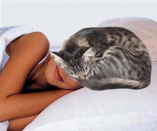 Почему кошки любят спать на людях: секреты взаимосвязи котов и человека