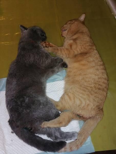 Как познакомить кошку с другими животными в доме