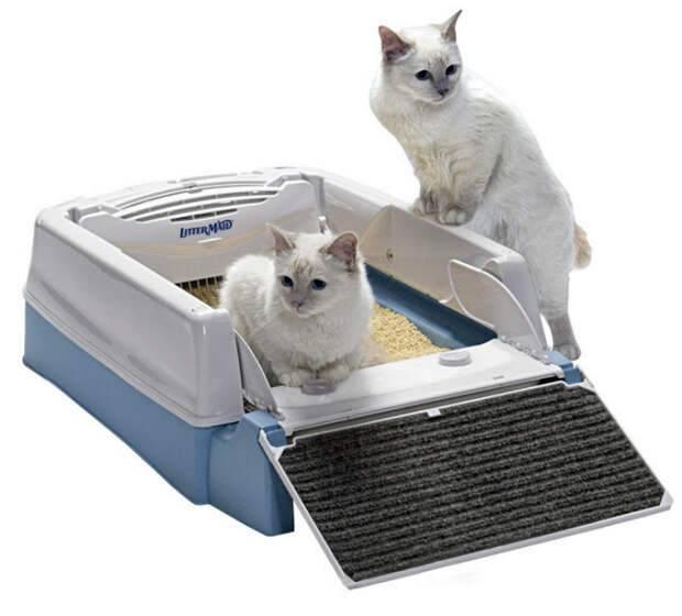 Какой лоток лучше для котенка и кошки: многообразие выбора