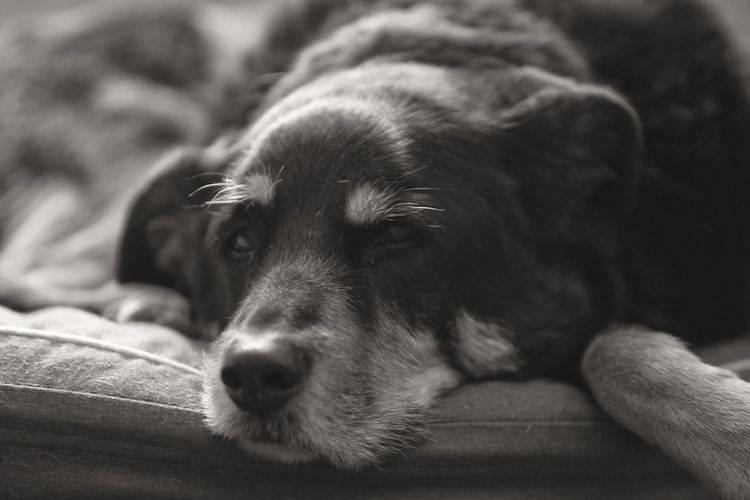Почему у собаки текут слюни