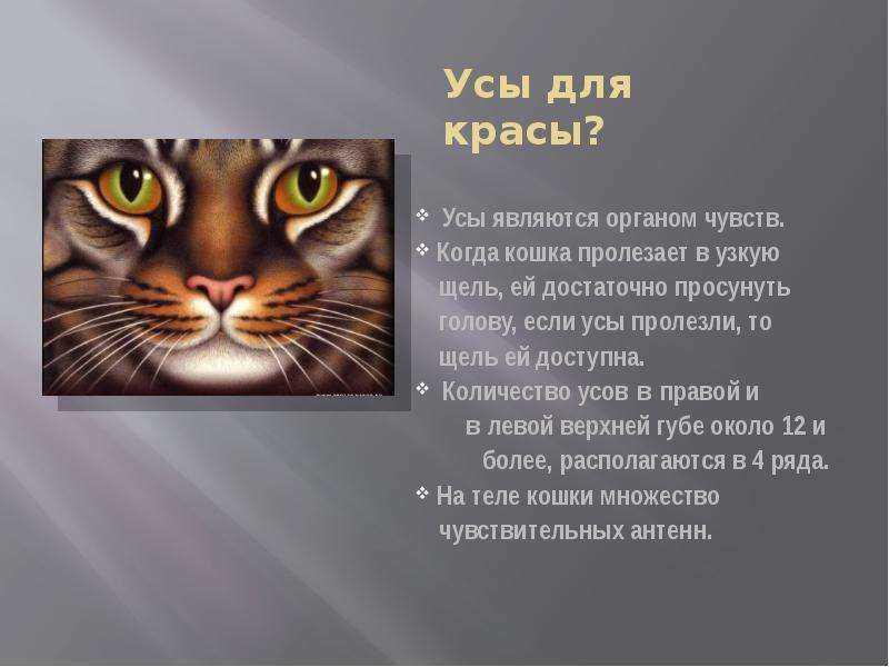 Особенности и функции кошачьих усов или зачем кошке усы?
