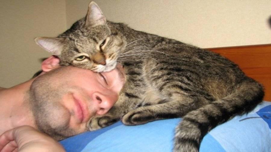 Почему кошки любят лежать на спине?