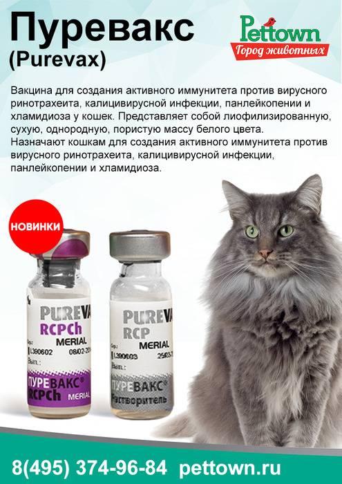 Вакцина пуревакс: защита кошки от пяти опасных болезней