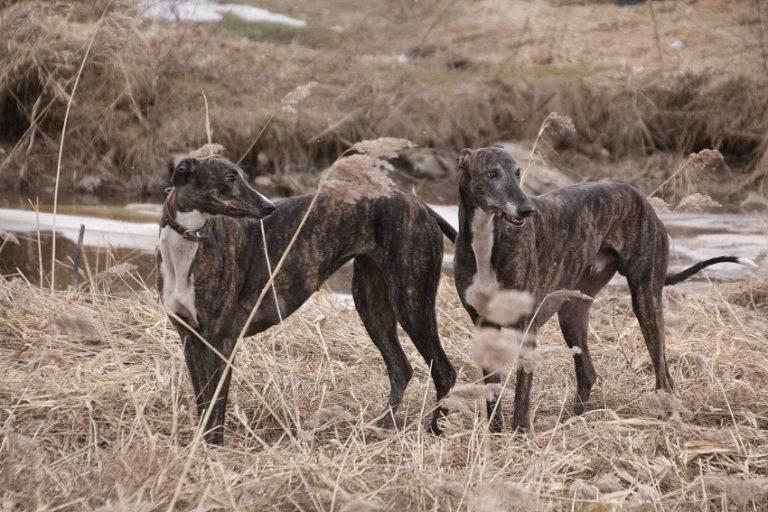 Мы можем их потерять: 35 уникальных животных австралии :: инфониак