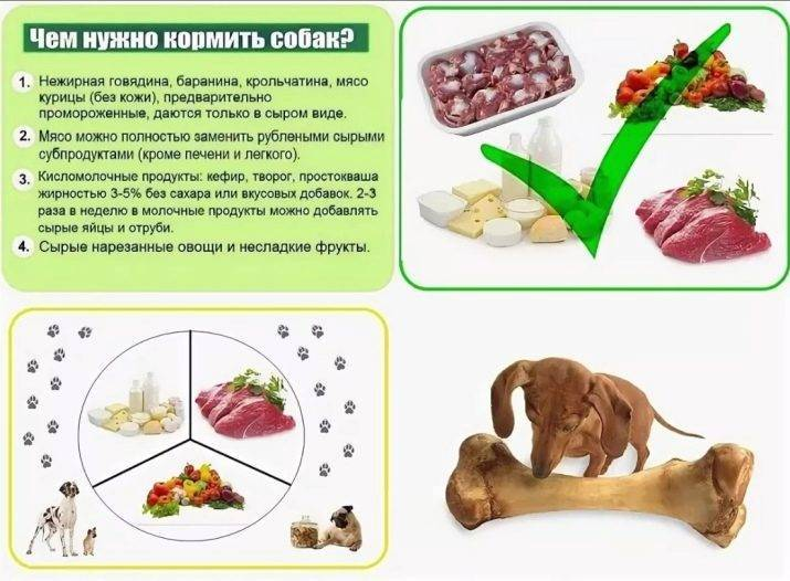 Дозировка сухого корма для собак: как определить, примеры