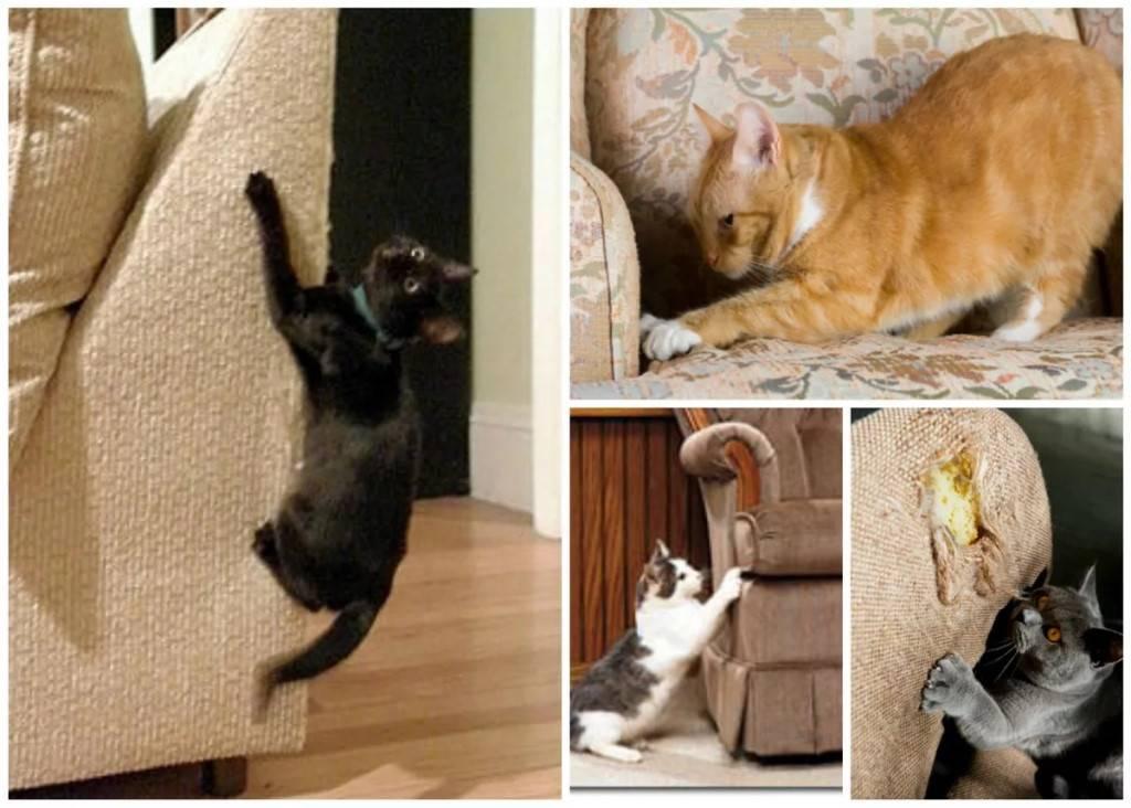 Как отучить кота драть мебель: причины и чем можно побрызгать диван