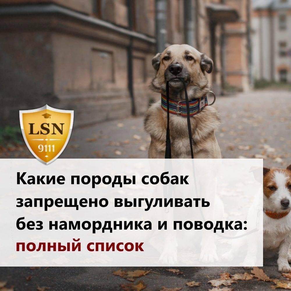 Правила выгула собак: закон в 2021 году в россии, штраф, запрещенные места, можно ли гулять без намордника и поводка в городе, в неположенном месте