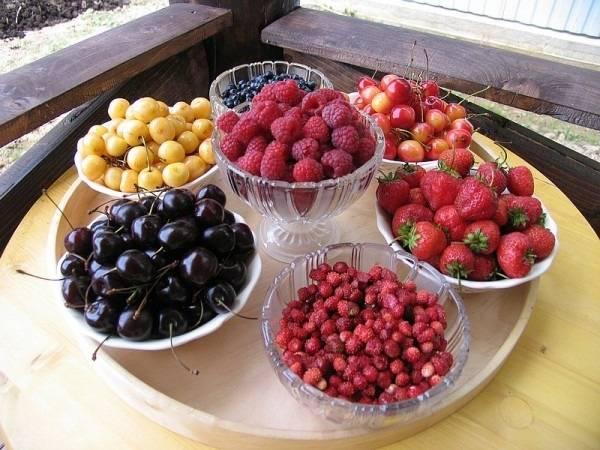 Какие фрукты и ягоды можно собакам