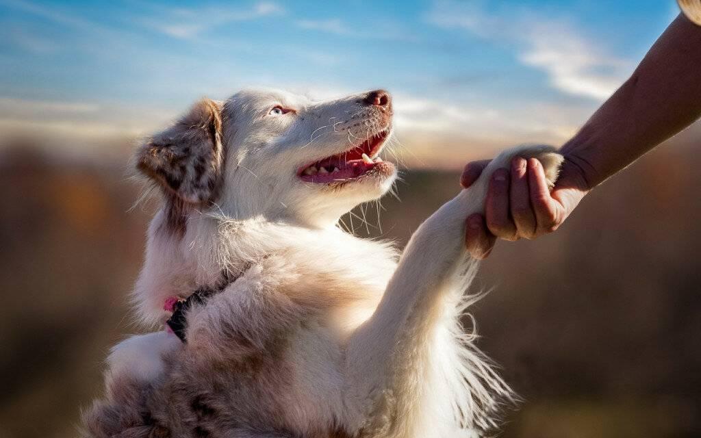 Собака в доме: как стать вожаком для питомца