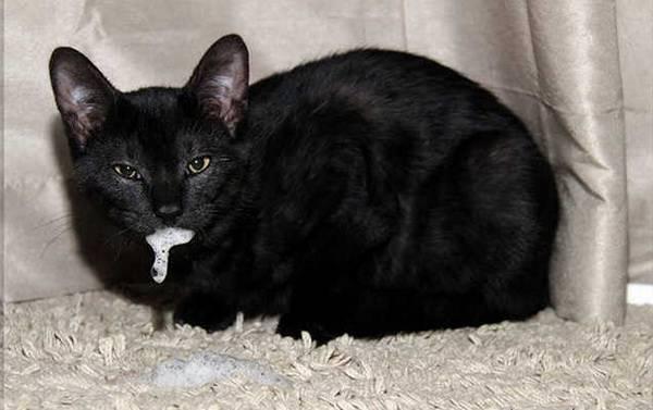 Хронический риносинусит у кошек — диагностика и лечение
