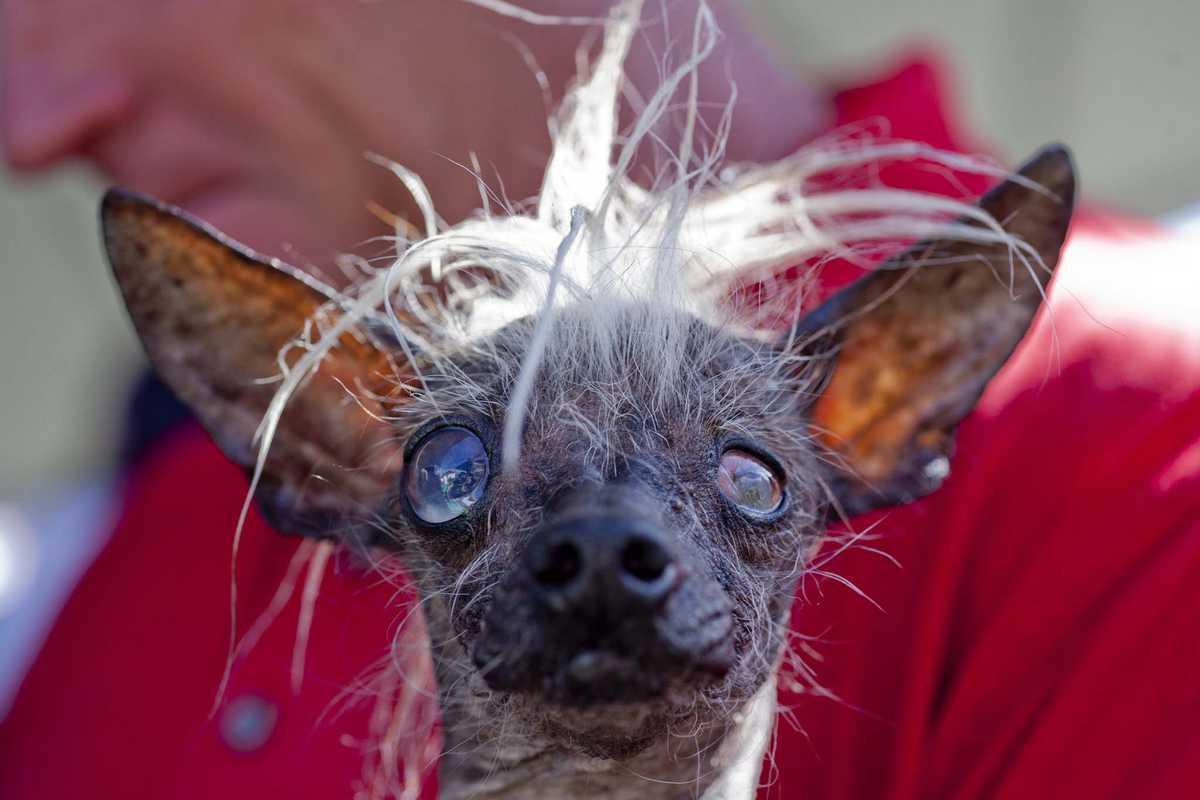 Топ-10 самых уродливых животных в мире! фото и описание