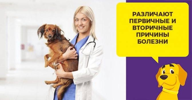 Гастроэнтерит у собак: симптомы, причины, лечение