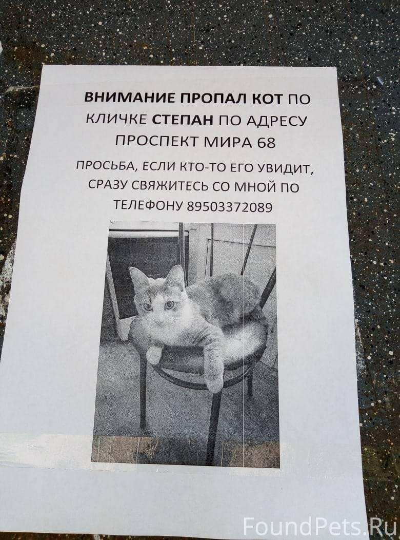 Кошка-потеряшка или как найти пропавшего питомца?