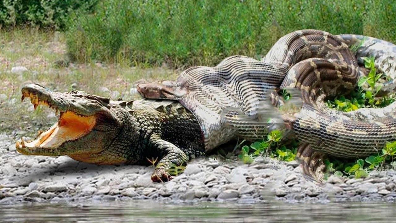Самые опасные животные в мире, фото, видео