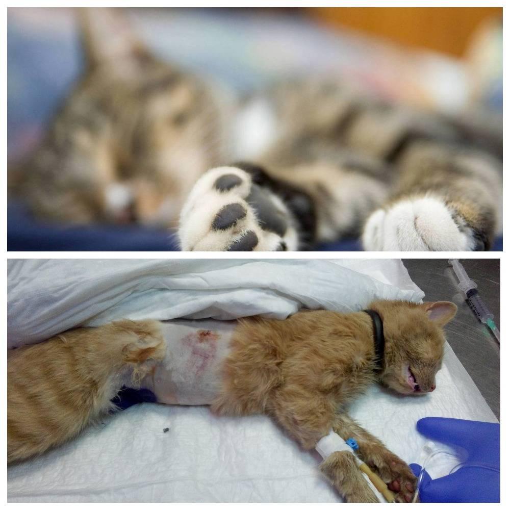 Вызов ветеринара на дом круглосуточно, усыпление собак и кошек.