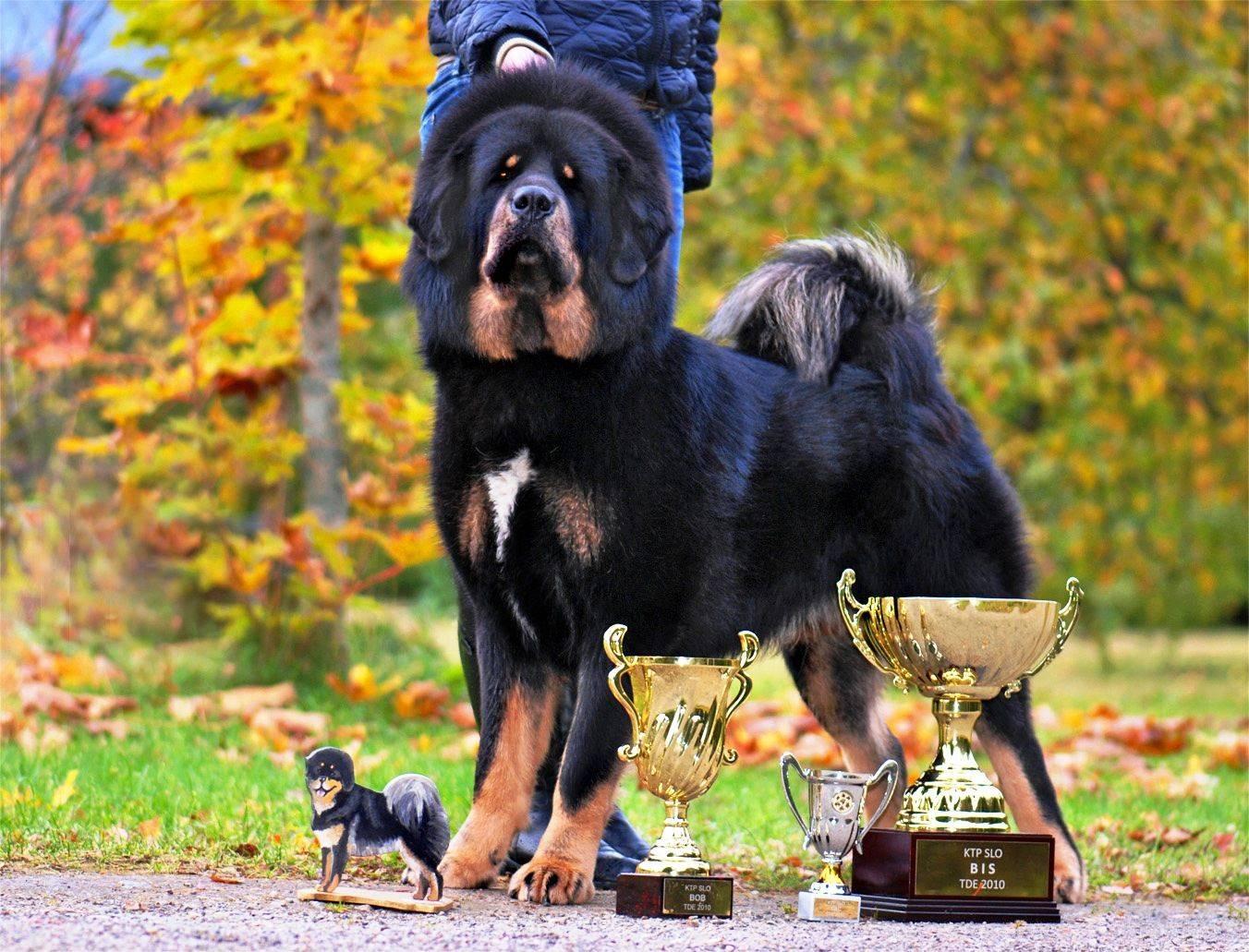 Топ 25 самые лучшие породы собак (рейтинг 2021)