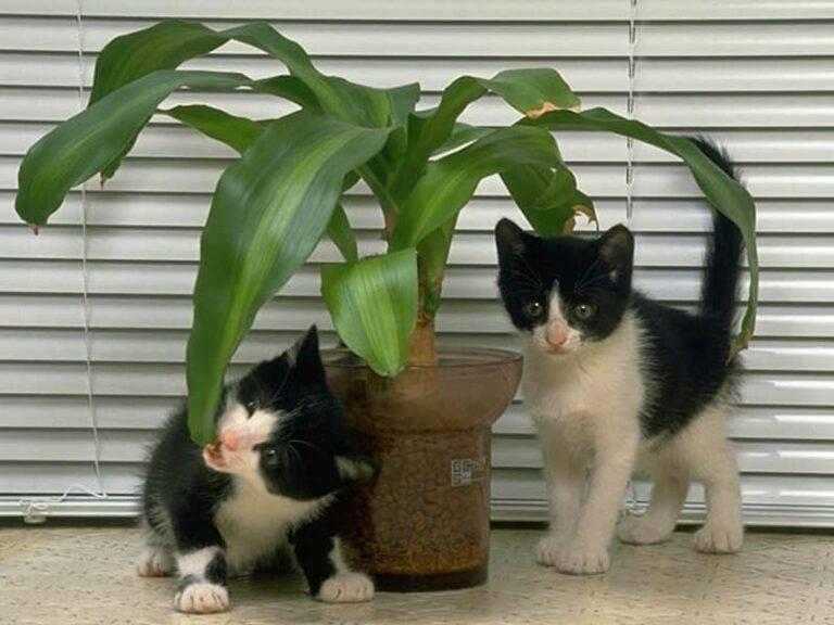Как защитить комнатные растения от кошки и отучить от цветов