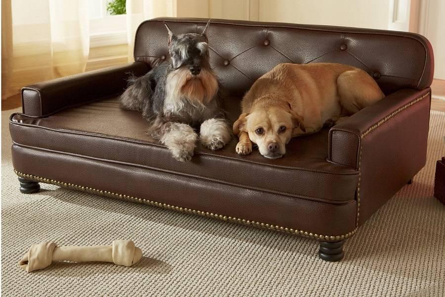 7 способов отучить щенка и взрослую собаку писать на диван и кровать хозяина