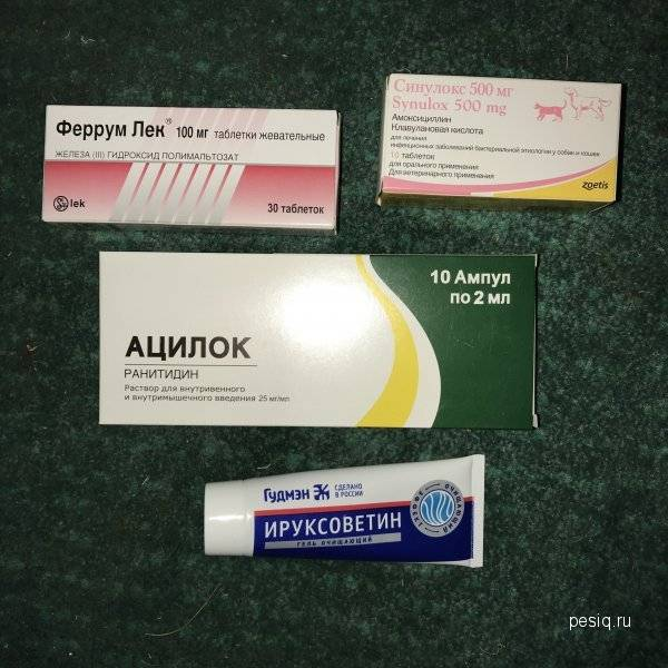Препарат ацилок при лечении заболеваний жкт у кошек
