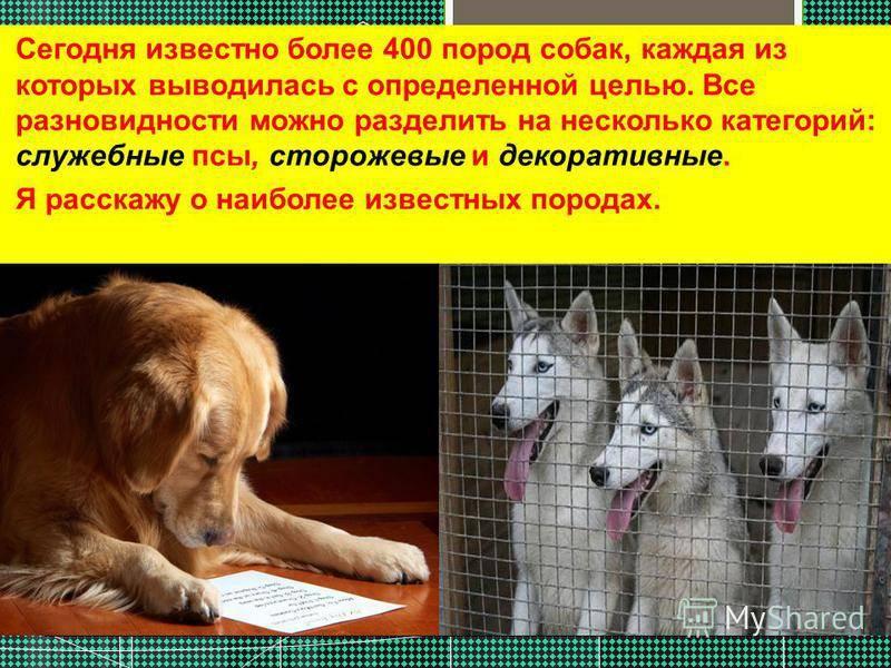 Служебные породы собак: особенности, список представителей