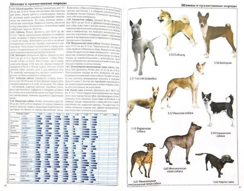 Породы собак среднего размера с фото