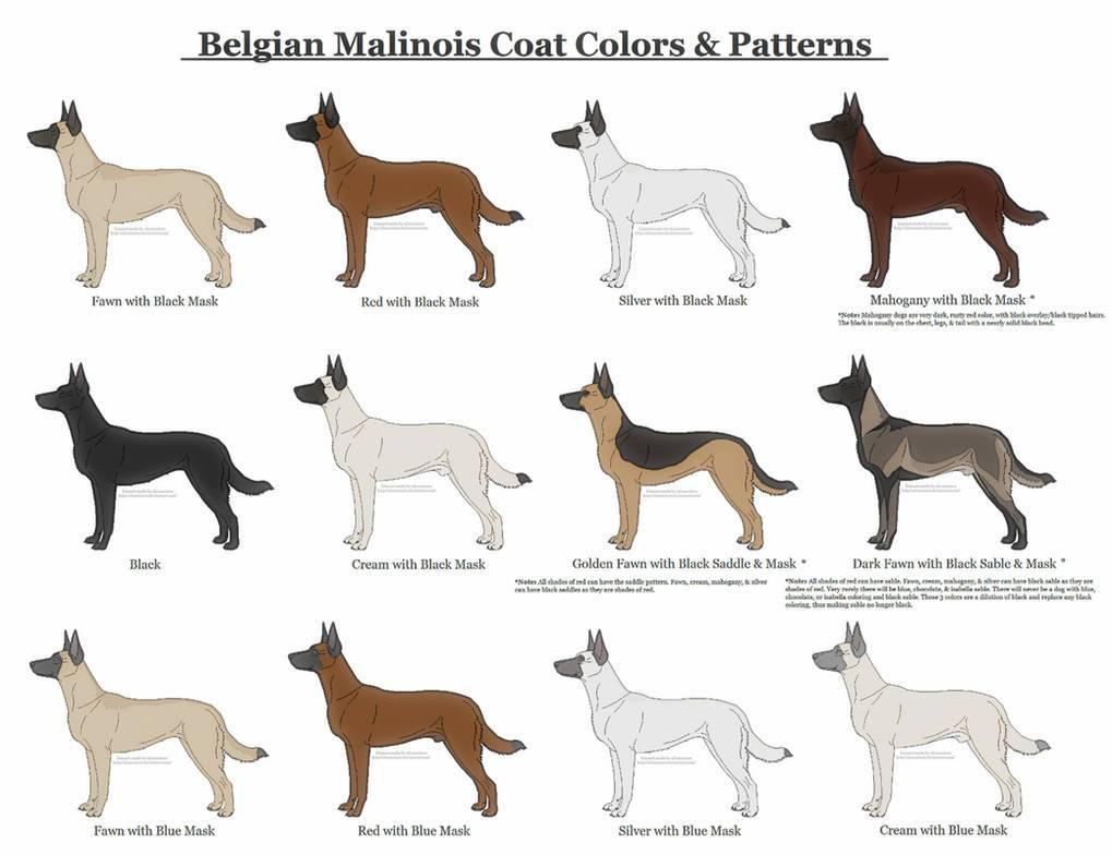 Окрасы немецкой овчарки: фото щенков и собак с описанием - petstime.ru