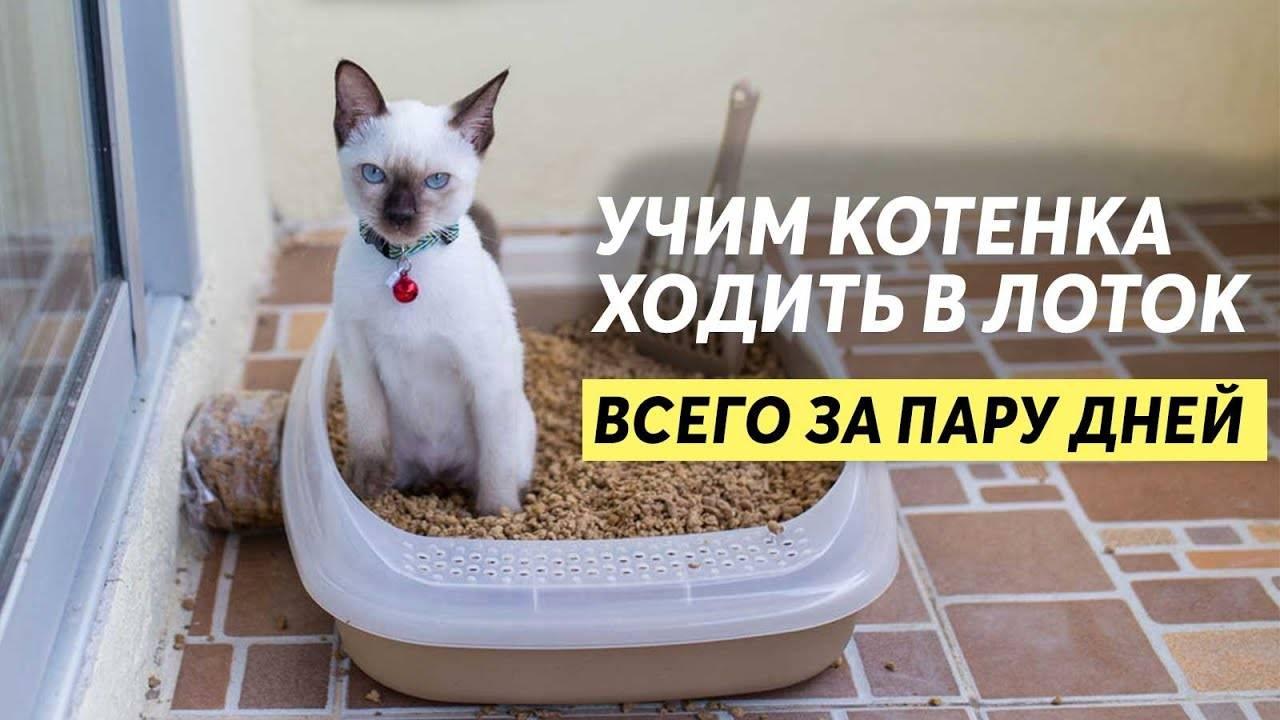 Как быстрее продать котят. как продать породистых котят? амулет для продажи котят
