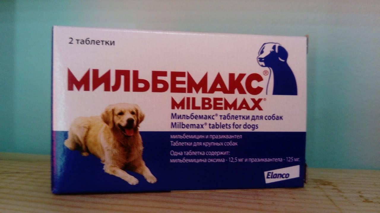 Советы, как выбрать таблетки от паразитов для собаки