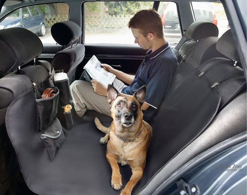 Что делать, если собаку укачивает в машине