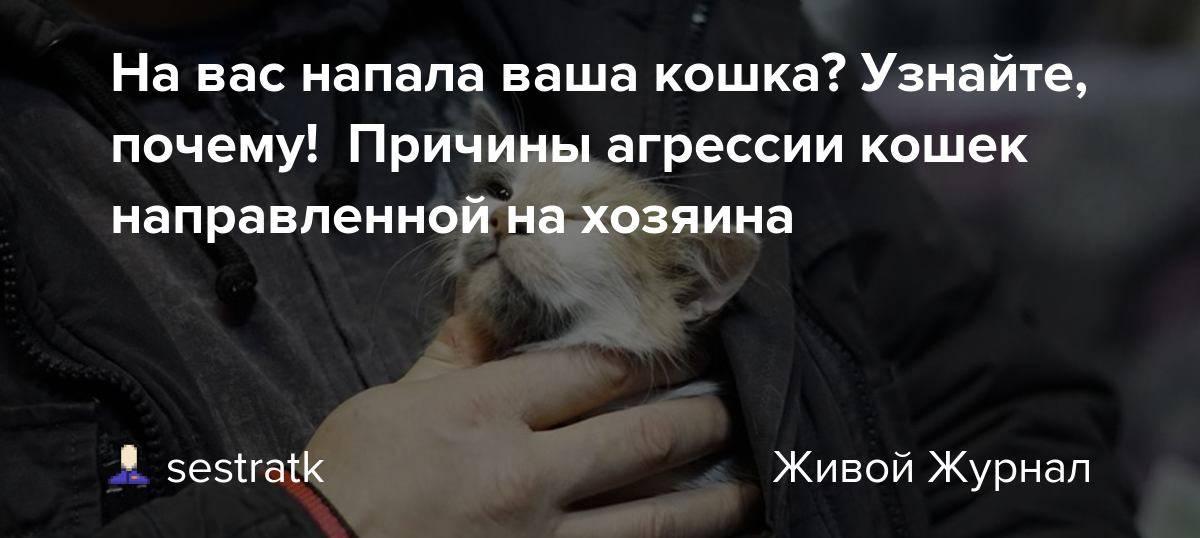 Причины агрессивного поведения у кошки, как решить проблему?