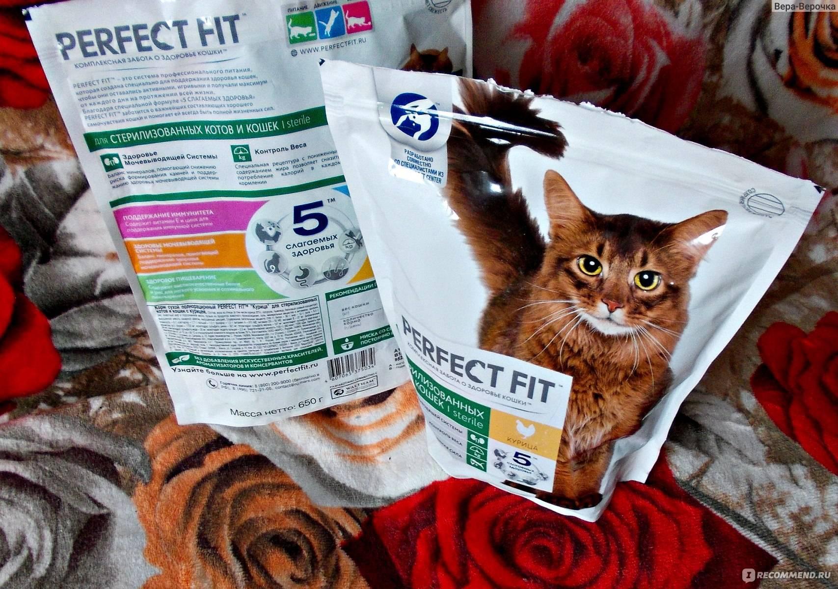 Обзор корма для кошек felix