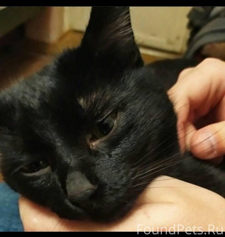 Можно ли заразиться лишаем от кошки: как грибок передается человеку