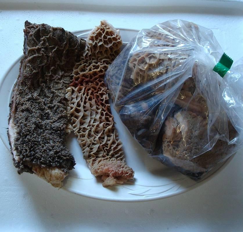 Говяжий рубец для собак: как готовить и давать, польза и вред, как часто можно кормить