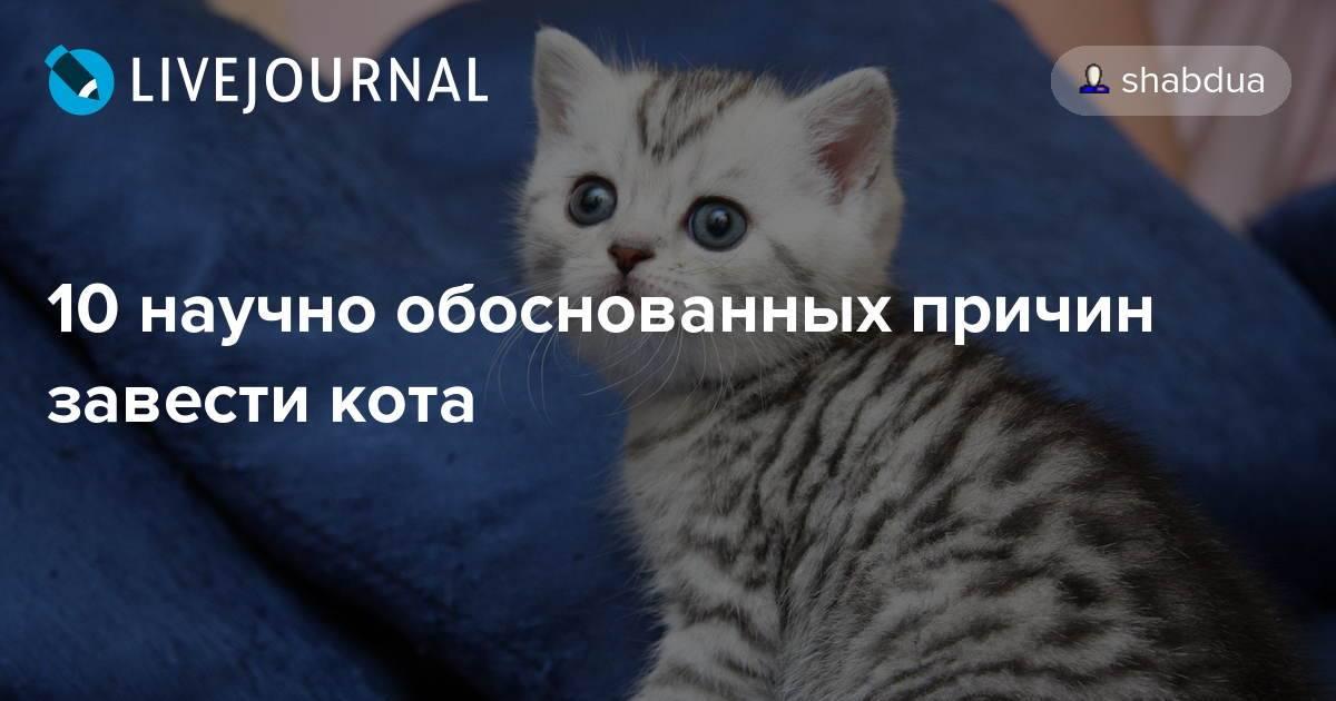 10 научно обоснованных причин завести кота - лайфхакер