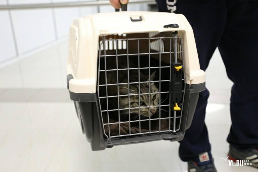 Правила перевозки собак в самолете за границу и по россии
