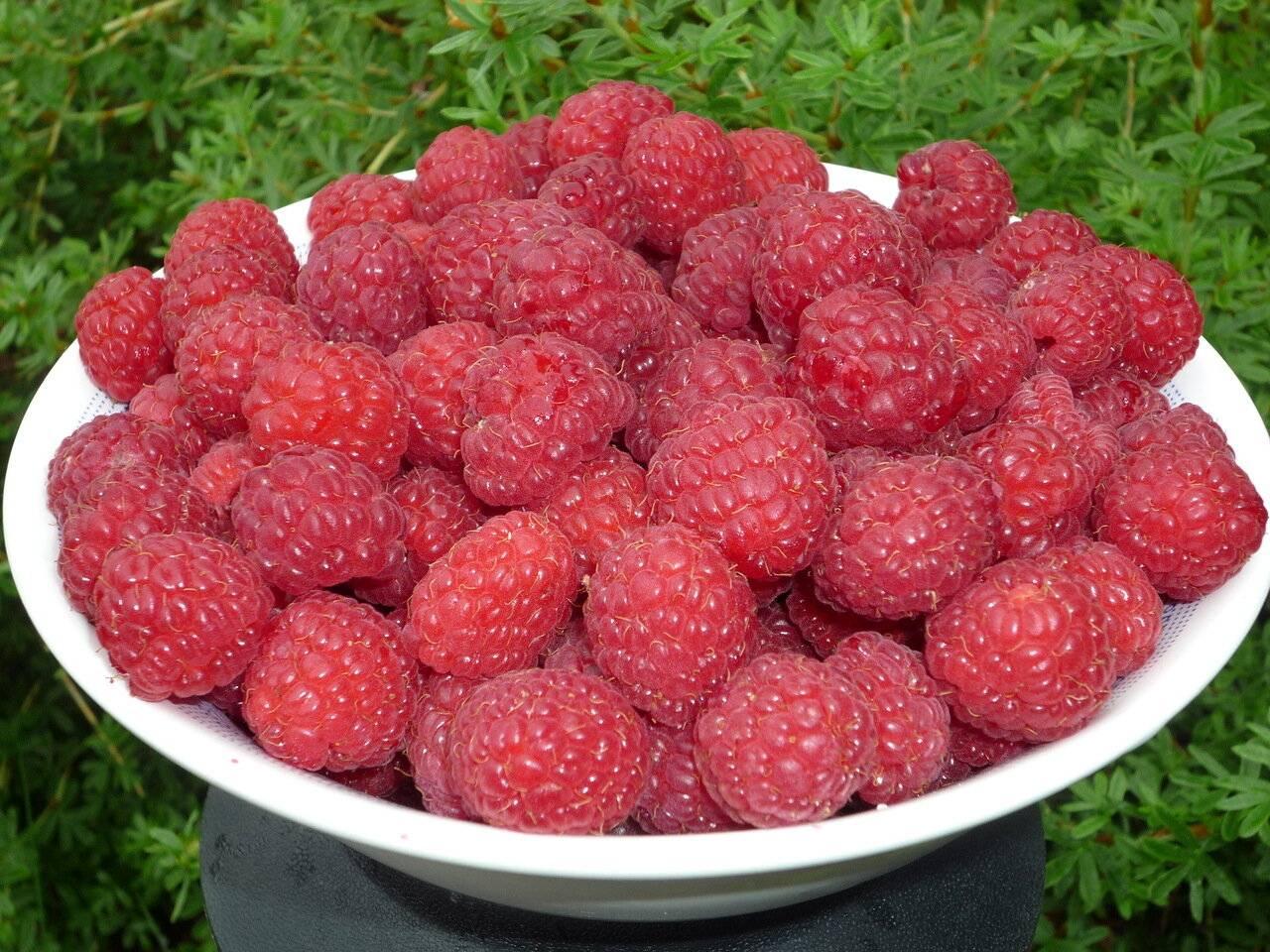 """""""фрукты надо выбирать по запаху"""". ученый о том, чем обрабатывают плоды и можно ли после их есть"""